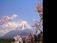纵观日本电视频道和网络内容运营商